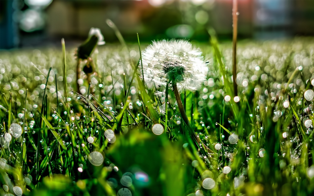 Ford to Build Interiors out of Dandelions
