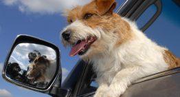 Earnhardt Ford Hosts Pet Adoptions