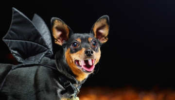 Spend Howl-o-ween With Your Pup