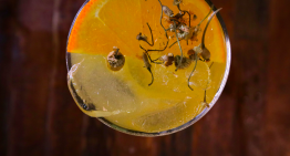 Enjoy True Food Kitchen's Springtime Cocktails