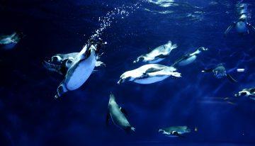 Ocean's 19 is Taking Over OdySea Aquarium