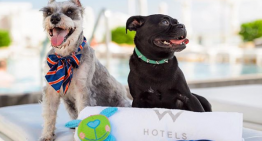 Sip Cocktails in Support of Fido During W Scottsdale's Pup Adoption Event