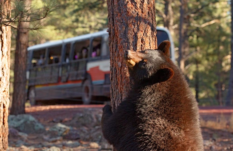 Best Northern Arizona Adventure Bearizona Wildlife Park