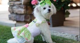 Zoe: Top Dog