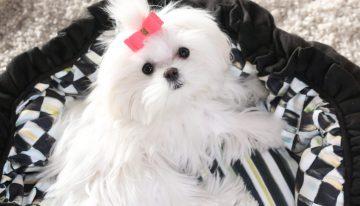 Top Dog: Coco
