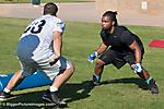 Arizona Rattlers Tryouts