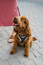AZ Foothills Dog Days of Summer Yappy Hour