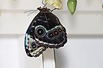 Butterfly Wonderland Pre-Opening