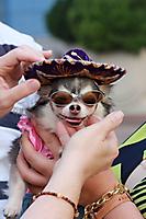 Dog Days of Summer Glendale Casting Call Scenes