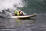 Dogs On Surfboards!