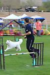 Fiesta Cluster Dog Show