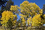 Greer Lodge Resort Fall Colors