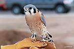 Liberty Wildlife Rehabilitation Foundation