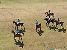 Scottsdale Polo Championships, Horses & Horsepower