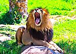 Summer Escape - San Diego Safari Park