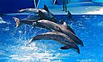 Summer Escape - San Diego SeaWorld