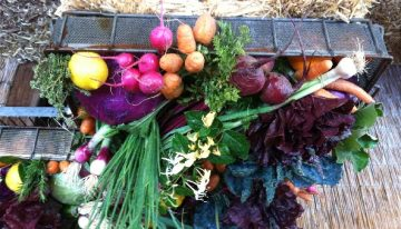 Win Veggies Galore from Maya's Farm!