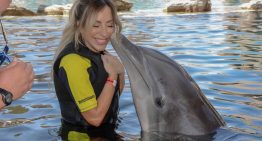 Dolphins In The Desert – Dolphinaris