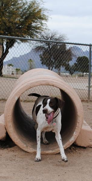 Best Dog Parks Tucson