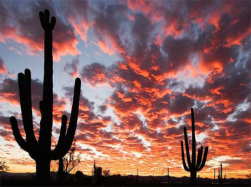 Date ideas in arizona
