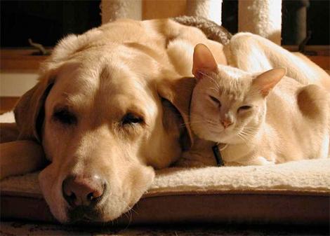 Giving Dog Away Humane Society