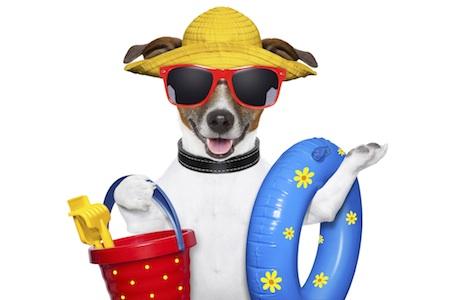 19_July_Dog_Days_of_Summer.jpg 450×300 pixels | Dog days ...