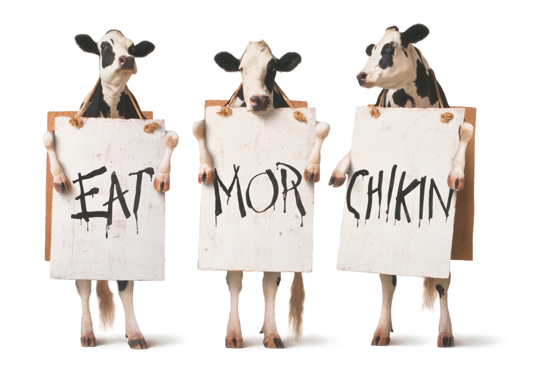 Image Result For Cow Appreciation Day