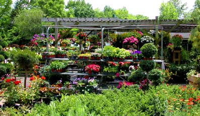 Get Out Your Gardener S Pads And Gloves Ready To A Little Dirty Planting Flowers Trees Here Are Some Valley Nurseries Plant