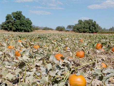 10 Halloween corn mazes around Arizona - azcentral