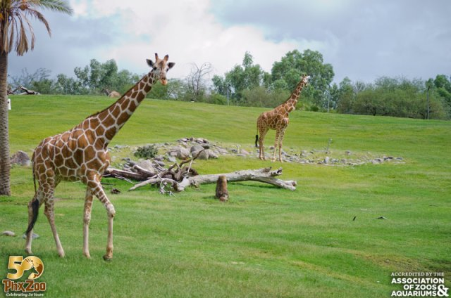 Wildlife World Zoo, Aquarium, & Safari Park is open seven days a week, days a year, including all holidays Discounts Groups of 10 or more: $ OFF per person, not valid with any other offers or .