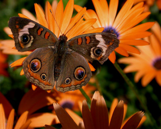 Shades Of Fall At Butterfly Wonderland