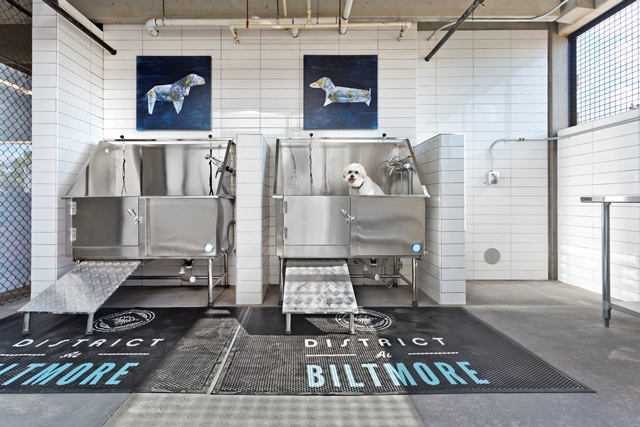 the district at Biltmore dog spa.jpg