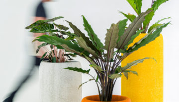 BuzziPlanter – Celebrating and Connecting You with Nature in Your Office or Home