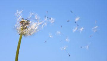 Banning Allergens