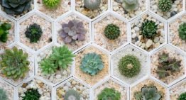 Succulents in Your Space