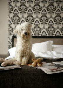 Dog sitting on bed with soft toys and newspaper