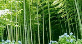 Bamboo Linens