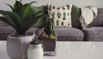 March 1 to March 3: Maricopa County Home & Landscape Show