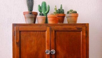 5 Things to Know About Cacti and Succulents