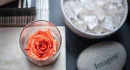 Meet the Rose That Lasts for Months