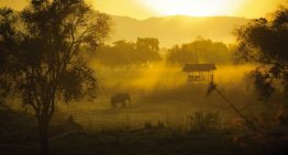 Four Seasons Elephant Camp in Thailand