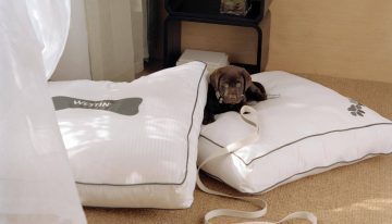 Adopt a Dog and Receive a Complimentary Room Upgrade at The Westin La Paloma Resort & Spa