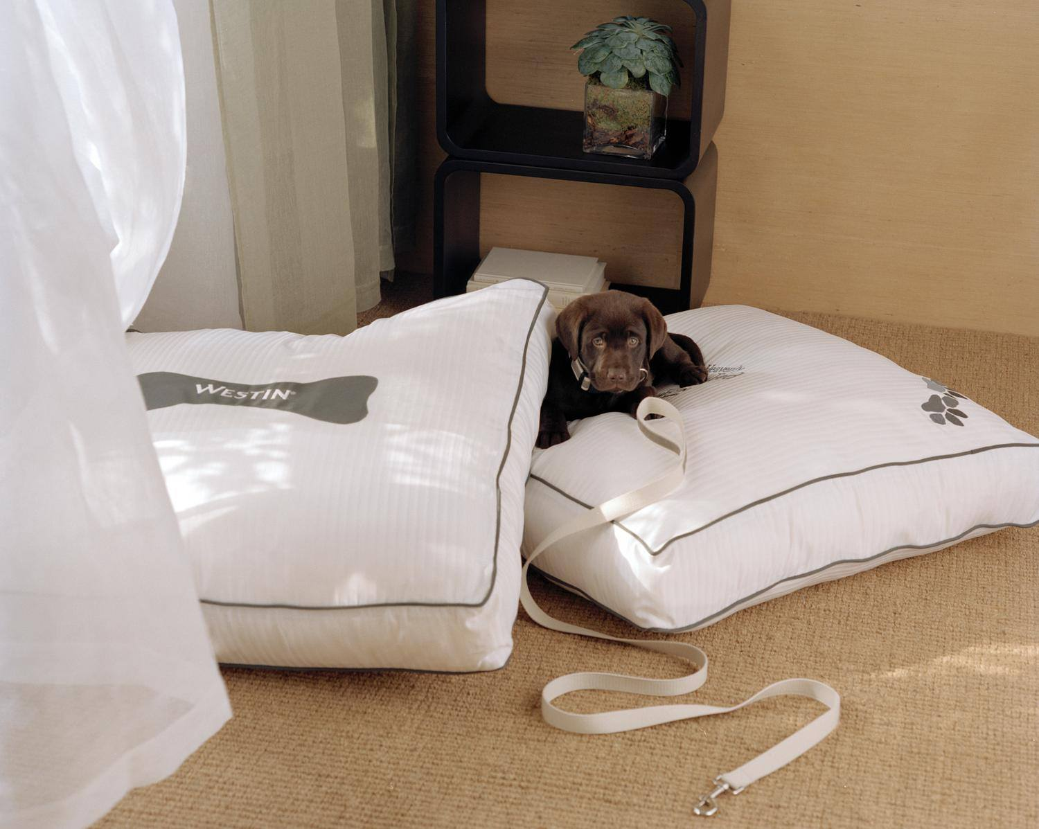 Adopt A Dog And Receive A Complimentary Room Upgrade At The Westin