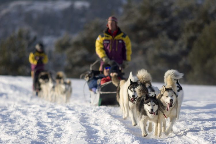Dog sledding tourism
