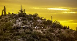 Savor the Last Days of Summer at Tanque Verde Ranch, Tucson
