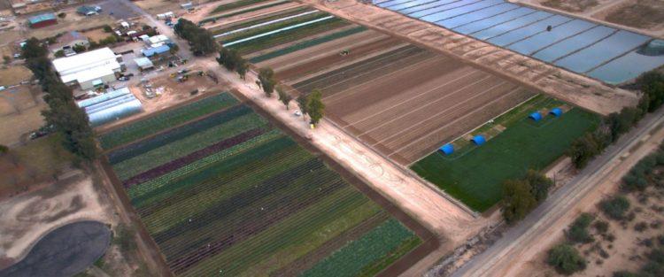 blue-sky-organic-farms