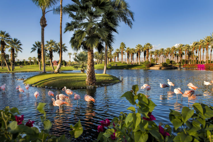 JW Marriott Desert Springs Resort & Spa - Flamingos