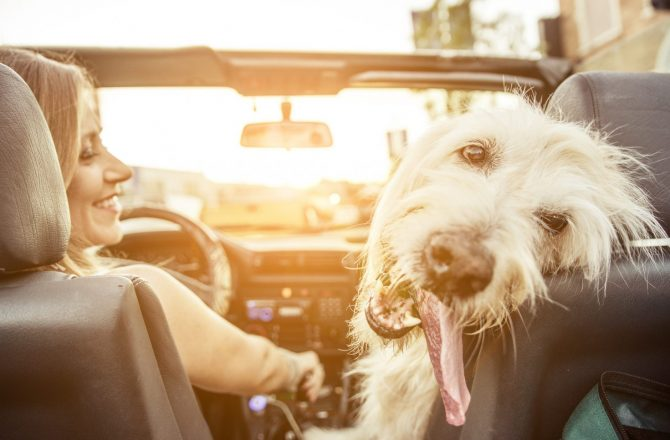 7 Tips for Keeping Pets Safe on Summer Road Trips