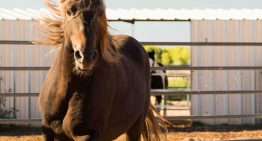 Adopt a Horse and More at Hyatt Regency Tamaya Resort & Spa