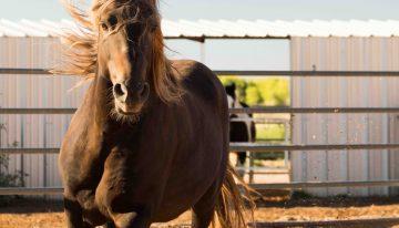 Adopt a Horse and More at Hyatt Regency Tamaya Resort & Spa
